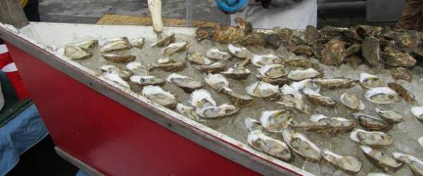 Wellfleet oysters on Cape Cod