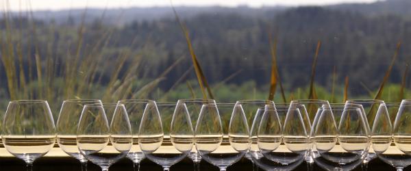 Napa Valley wine glasses