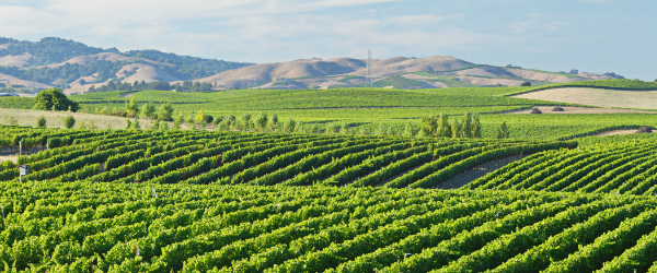 Top Napa Valley Wineries Worth Traveling For